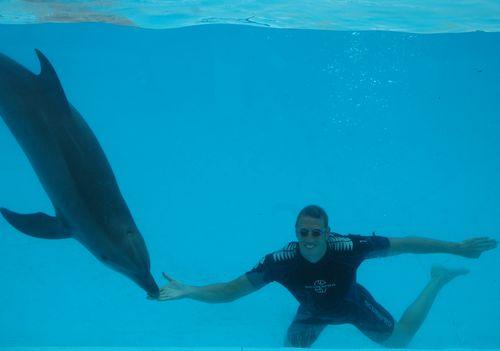 Rencontre avec les dauphins marineland combien de temps