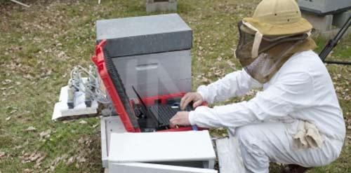 """Résultat de recherche d'images pour """"abeilles néonicotinoïdes inra"""""""